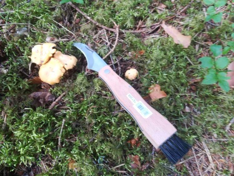 Basis svampkniv med borste från Modern house.