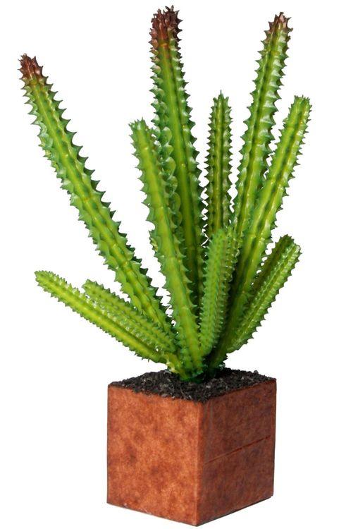 Euphorbia Törel en konstväxt från Cult design. Färg: Grön.