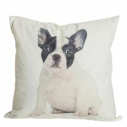 Dogge ett kuddfodral i sammet med ett digitaltryck med en fransk bulldog. Färg: Off-white med vit och svart fransk bulldog.