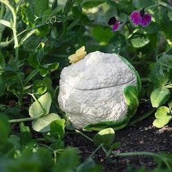 Veggie blomkål gömma från Cult design. Färg: Vit.