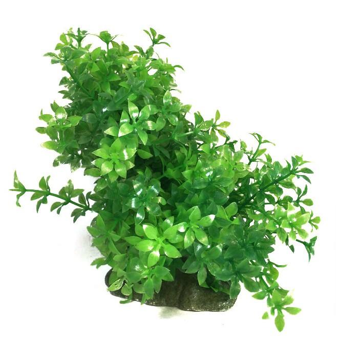 Plastväxt Bacopa 11-17 cm