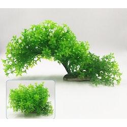 Plastväxt Bacopa 12-21 cm
