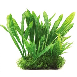 Plastväxt Echinodorus green 21 cm