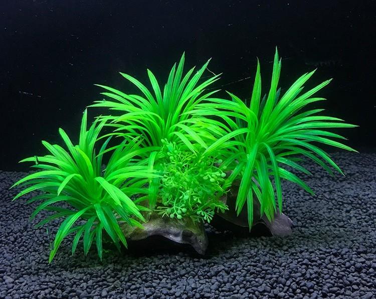 Plastväxt på rot Sagittaria 13 cm