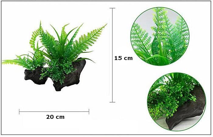 Plastväxt på rot Fern 15 cm A