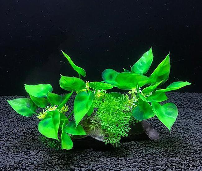 Plastväxt på rot Anubias 11 cm
