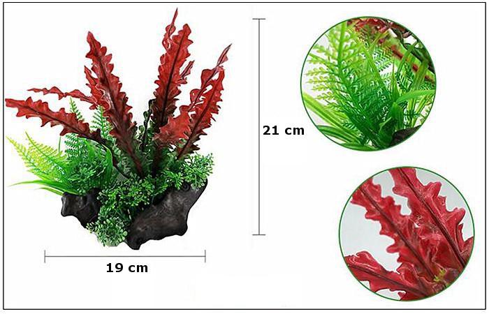 Plastväxt på rot Cryptocoryne red 21 cm  A