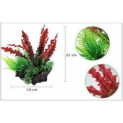 Plastväxt på rot Cryptocoryne red 21 cm