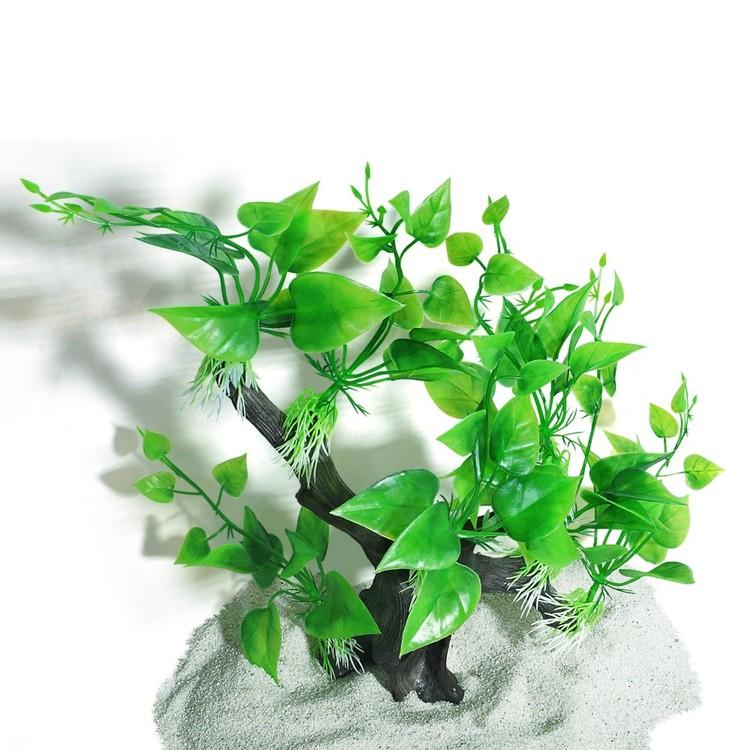 Plastväxt på Rot Anubias 30 cm