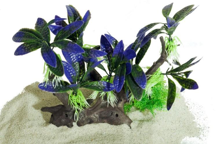 Plastväxt på rot Bucephalandra 18 cm
