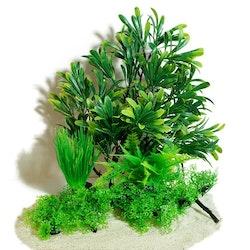 Plastväxt på rot Azalea 30 cm