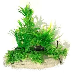 Plastväxt på rot Pinnatifida 25 cm