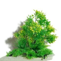 Plastväxt på rot Prunus 30 cm