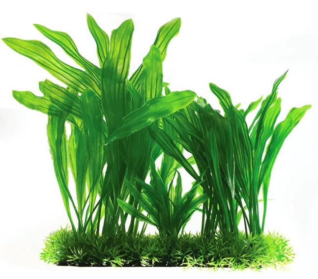 Plastväxt Echinodorus 30 cm