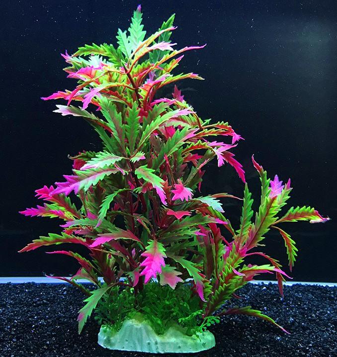 Plastväxt Pinnatifida red 27 cm