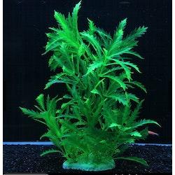 Plastväxt Pinnatifida green 27 cm