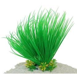 Plastväxt Lilaeopsis 18 cm