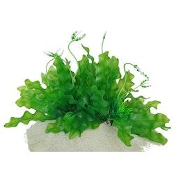 Plastväxt Longiplumulosus 17 cm