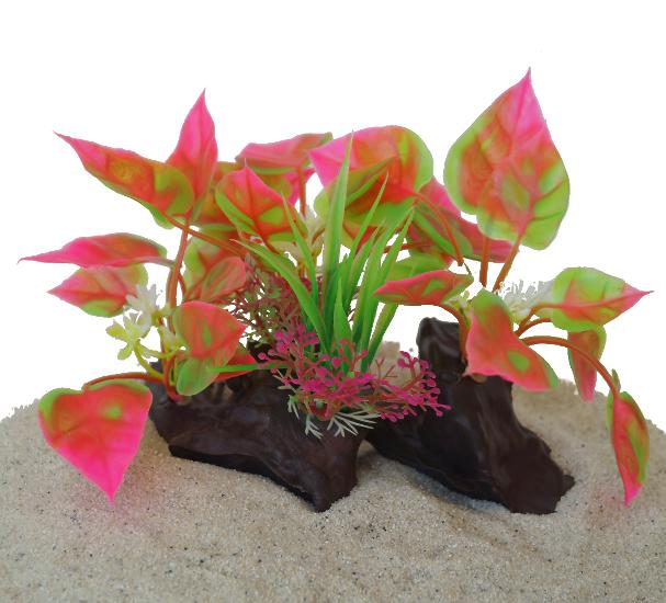 Plastväxt på rot Anubias red 11 cm