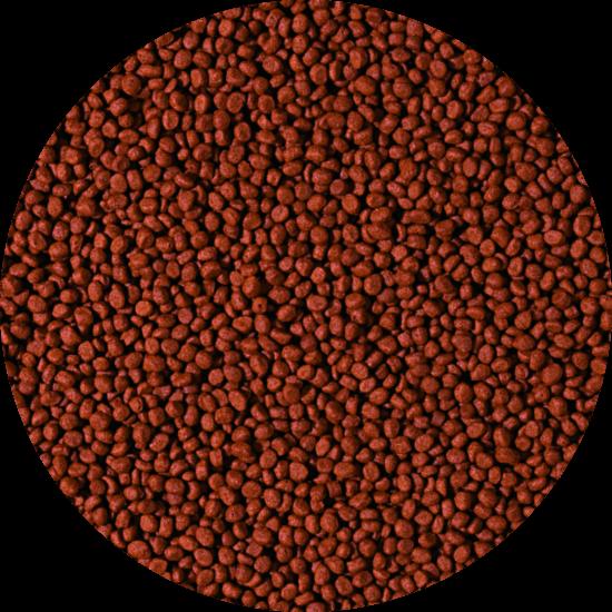 CARNIVORE - small pellet 1000 ml B