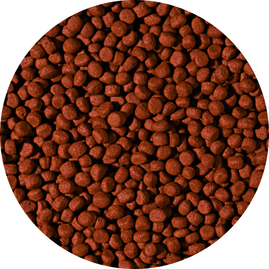 CARNIVORE - medium pellet 5 liter B