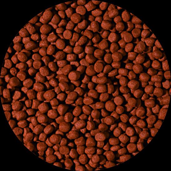 CARNIVORE - medium pellet 10 liter B