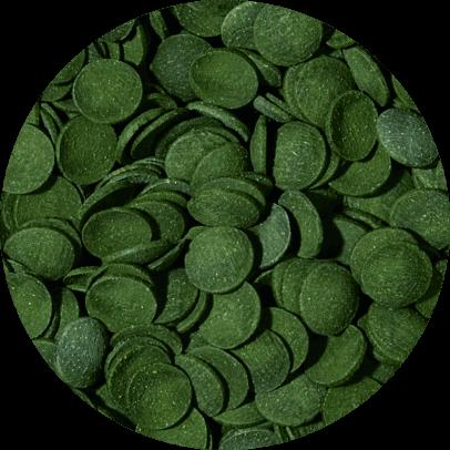 Green algae wafers 5 liter B