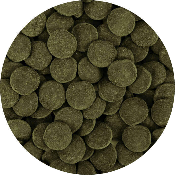 Hi-Algae Discs XXL 250 ml B
