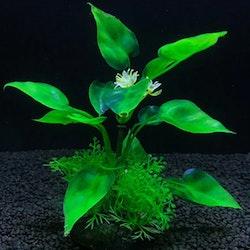 Plastväxt Anubias 13 cm