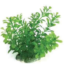 Plastväxt Bacopa green 13 cm