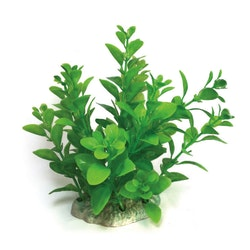 Plastväxt Bacopa grön 13 cm