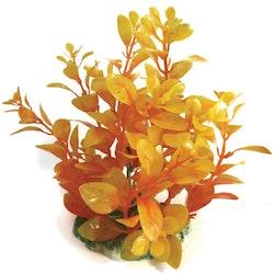 Plastväxt Bacopa orange 13 cm