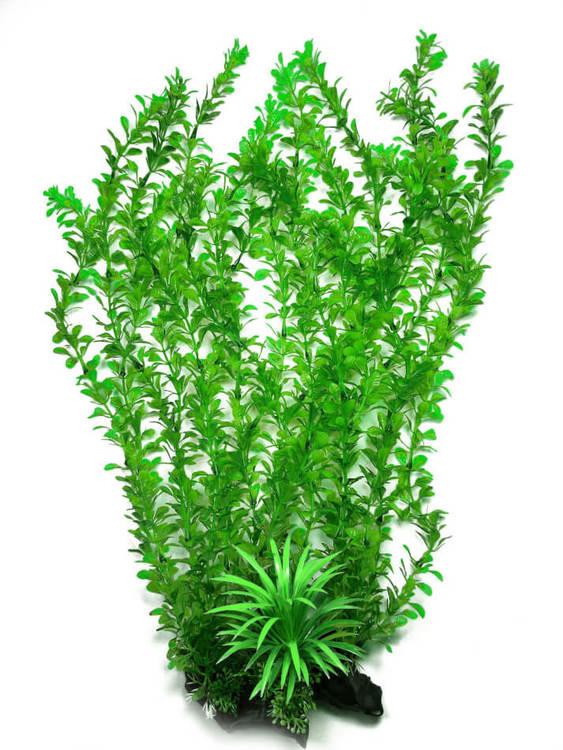 Plastväxt Rotala bonsai grön 40 cm B