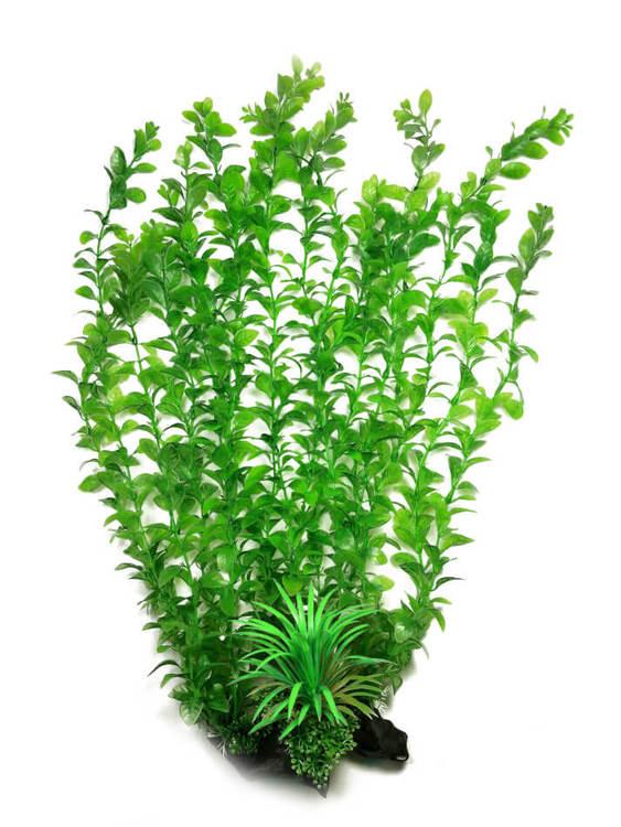 Plastväxt Hygrophila 40 cm B
