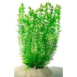 Plastväxt Hygrophila 40 cm