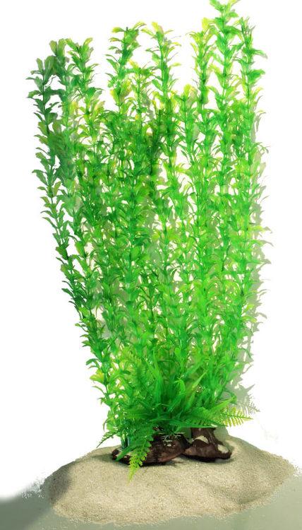 Plastväxt Shinnersia 40 cm A