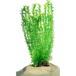 Plastväxt Shinnersia 40 cm