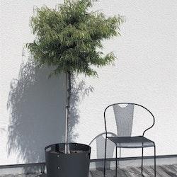 SMD Design Silo Korg