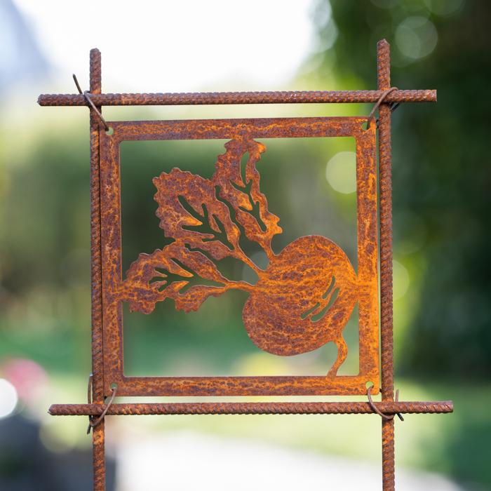 Beetroot rust