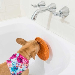 LickiMat Splash Hundskål
