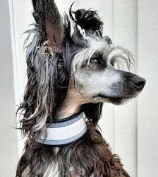 Mini&Bror närproducerade hundhalsband SNÖ med reflex