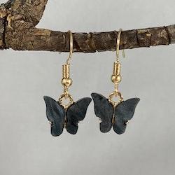 Fjärilar svart