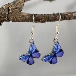 Fjärilsörhängen Lila/blå