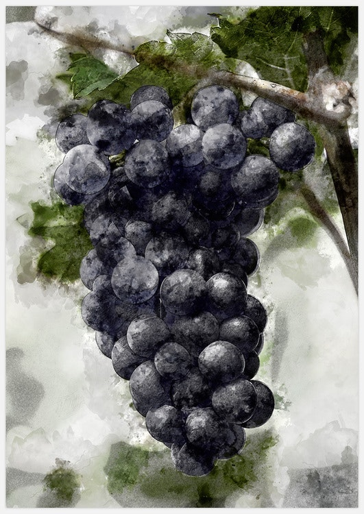 Painted Concord Grapes