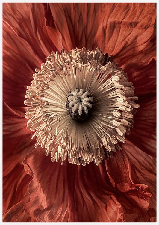 Red Flower Heart