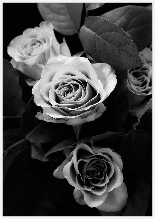 Classic Roses black & white
