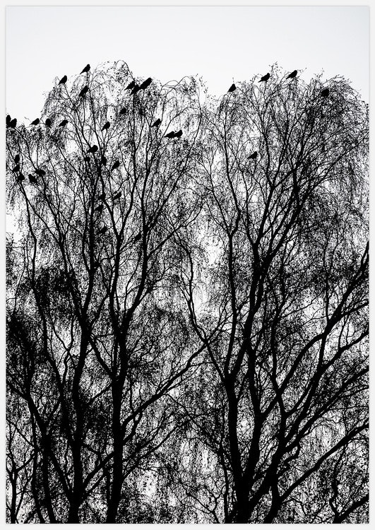 Birds in Trees