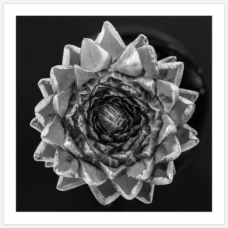 Artichoke black & white