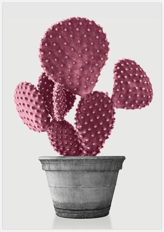 Pink Cactus 2