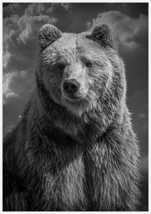 Bear close up